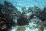 Les fonds sous marin des Tobago Cayes